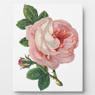 Plaque Photo Les roses sont roses