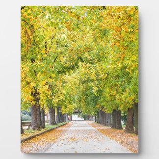 Plaque Photo Passage couvert complètement des arbres