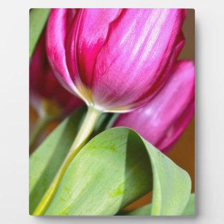 Plaque Photo Pointe du pied par les tulipes