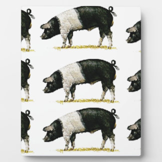 Plaque Photo porcs dans une rangée