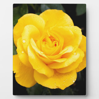 Plaque Photo Rose jaune