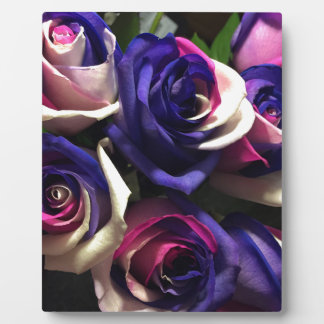 Plaque Photo Roses de colorant de cravate : Blanc, rose, et