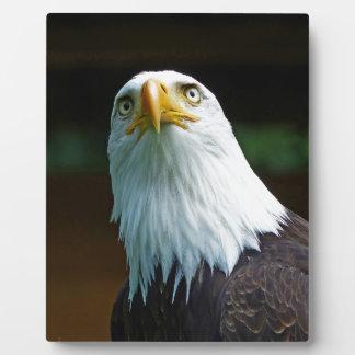 Plaque Photo Tête américaine d'Eagle chauve