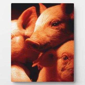 Plaque Photo Trois petits porcs