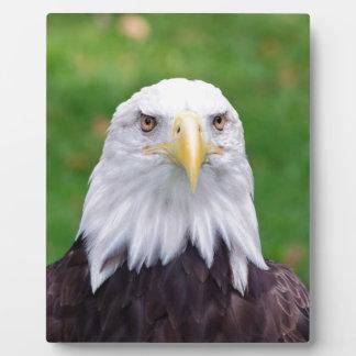Plaque Photo Yeux d'Eagle