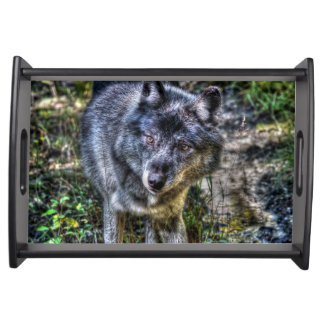 Plateau Art masculin de photo de nature de faune de loup