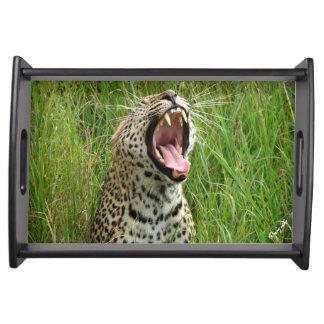 Plateau de baîllement de portion de léopard