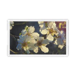 Plateau de fleurs de cerisier