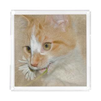 Plateau En Acrylique chat tigré d'or avec la marguerite