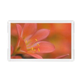 Plateau En Acrylique Fleur assez rouge de Clivia