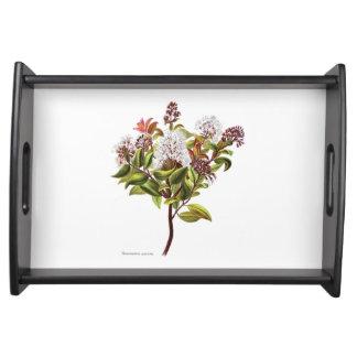 Plateau Fleurs vintages de NZ - albiflora de Meterosideros