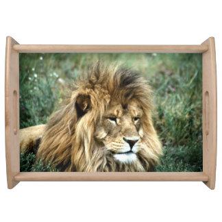 Plateau Lion africain