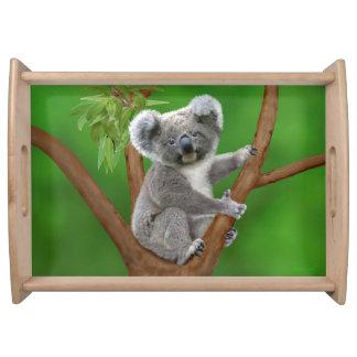 Plateau Ours de koala aux yeux bleus de bébé