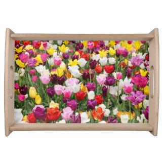 Plateau Tulipes
