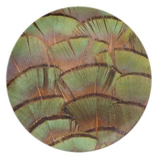 Plume de faisan éventée par vert assiettes en mélamine