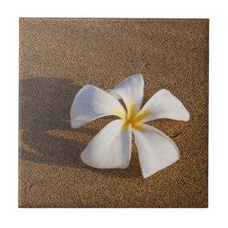 Plumeria sur la plage sablonneuse, Maui, Hawaï, Carreau