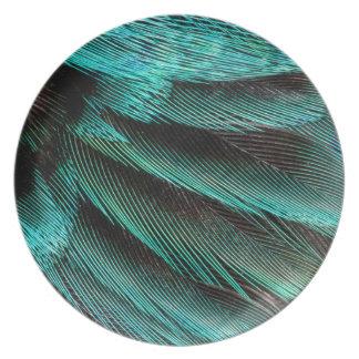 Plumes bleues de couvert d'aile assiette