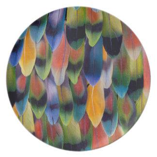 Plumes colorées de perroquet de perruche assiettes en mélamine