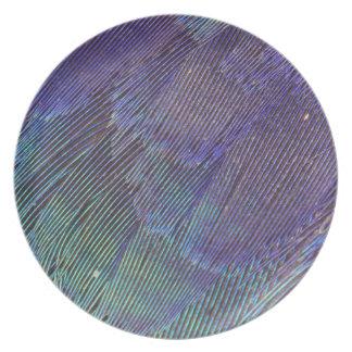 Plumes de rouleau de Lilas-breasted Assiette