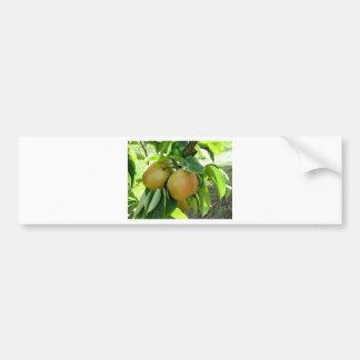 Poire d'Apple sur des branches d'arbre Autocollant De Voiture