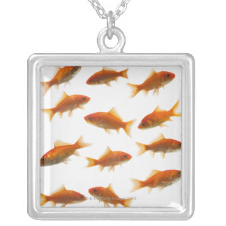 Poisson rouge collier
