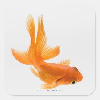 Rose des vents autocollants stickers for Vente poisson rouge 77