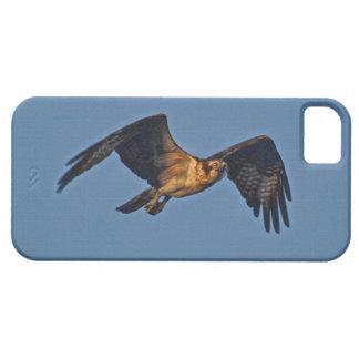 Poissons Eagle de balbuzard volant au coucher du Coque iPhone 5