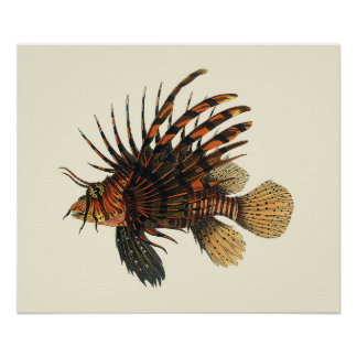 Poissons vintages de Lionfish, animal marin de la