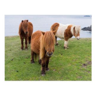 Poney de Shetland sur le pâturage près de hautes Cartes Postales