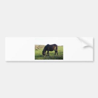 Poney d'Exmoor Autocollant De Voiture