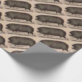 Porc du 19ème siècle de truie de Berkshire de Papier Cadeau