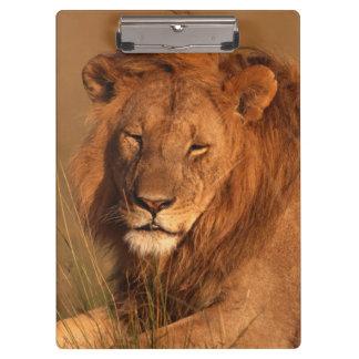 Porte-bloc Lion