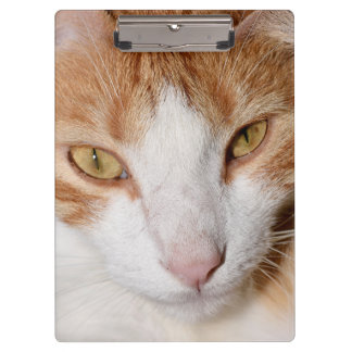 Porte-bloc Panneau d'agrafe frais de chat - l'orange est le