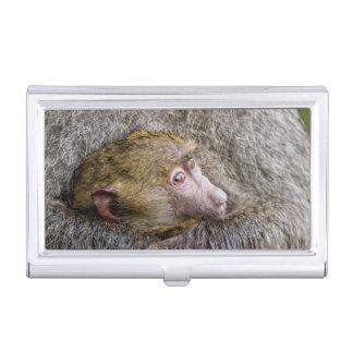 Porte-cartes De Visite Portrait d'un babouin olive de bébé (Papio Anubis)