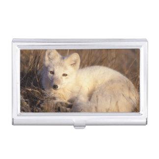 Porte-cartes De Visite renard arctique, lagopus d'Alopex, manteau