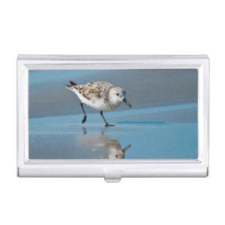 Porte-cartes De Visite Sanderling (Calidris Albe) alimentant sur la plage