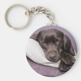 Porte-clés Chien de labrador retriever de chocolat somnolent