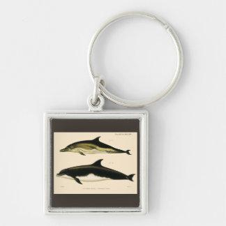 Porte-clés Dauphins vintages, animaux marins et mammifères