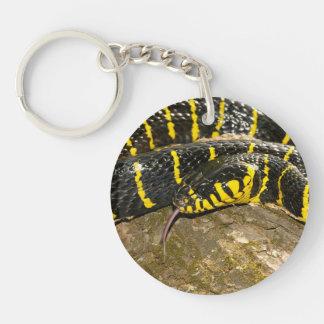 Porte-clés Dendrophila de Boiga ou serpent de palétuvier