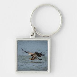 Porte-clés Eagle chauve non mûr plongeant pour un poisson