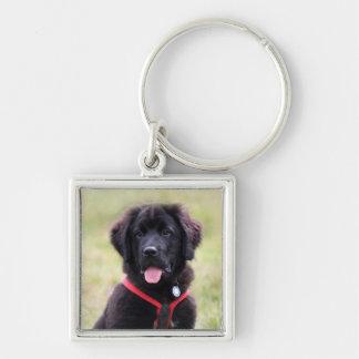 Porte-clés Photo mignonne de chiot de chien de Terre-Neuve,