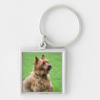 Porte-clés Porte - clé de chien de Terrier australien, idée