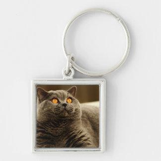 Porte-clés Porte - clé gris de prime de chat
