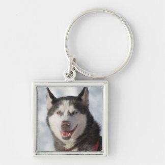 Porte-clés Portrait de chien de traîneau