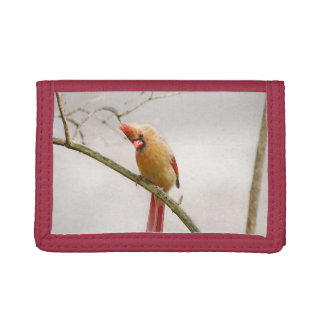 Portefeuille cardinal femelle curieux