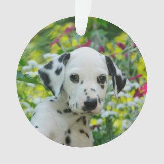 Portrait dalmatien mignon de chiot de chien -