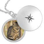 Portrait de chat d'écaille, photo d'animal de plan médaillon rond