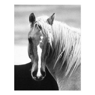 Portrait de cheval de BW Prospectus 21,6 Cm X 24,94 Cm