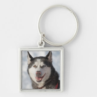 Portrait de chien de traîneau porte-clés