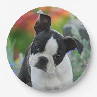 Portrait de chiot de chien de Boston Terrier, Assiettes En Papier
